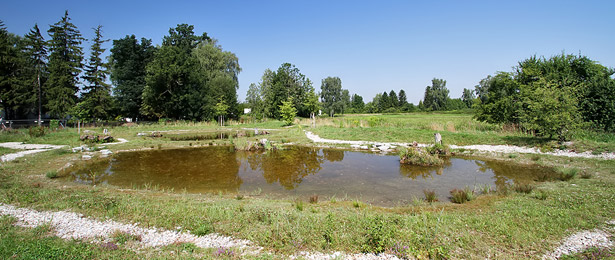 Naturnaher Teich